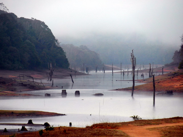 periyar morning mist