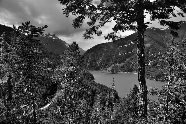 A Lake Beyond the Evergreens (Black & White, North Cascades National Park Service Complex)