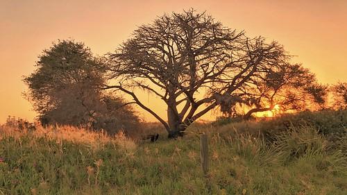 sunset iphone tree contrejour pregame