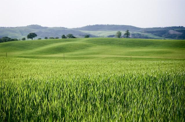 Il verde della Toscana