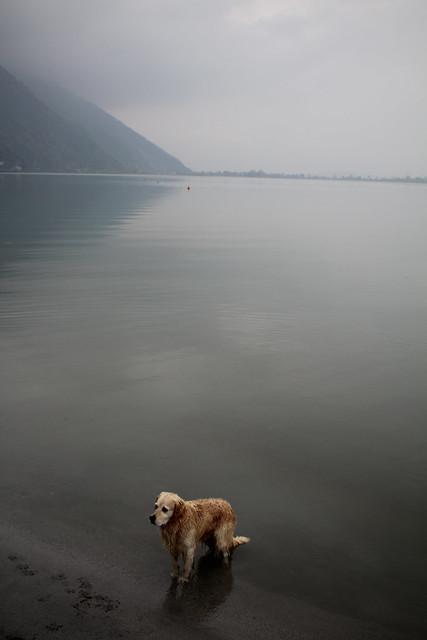 storia di un cane che si era perso. e di Matilde, esperta nel perdersi, ma ancora di più nel ritrovarsi.