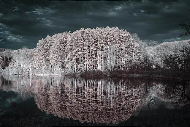 Pine Trees and Reflections in Infrared