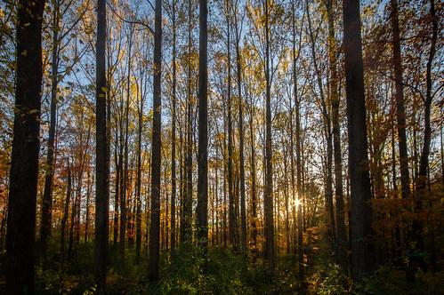 ridley creek state park pa pennsylvania forest woods fall autumn sunset dusk twilight nature landscape trees sun october orange yellow glow leaves backlit
