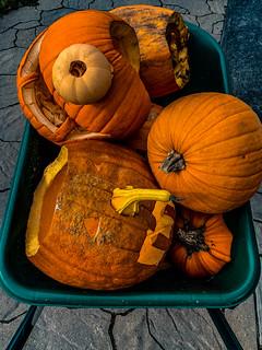 dead_pumpkins-2_MaxHDR_Dehaze_Contrast (1 of 1)