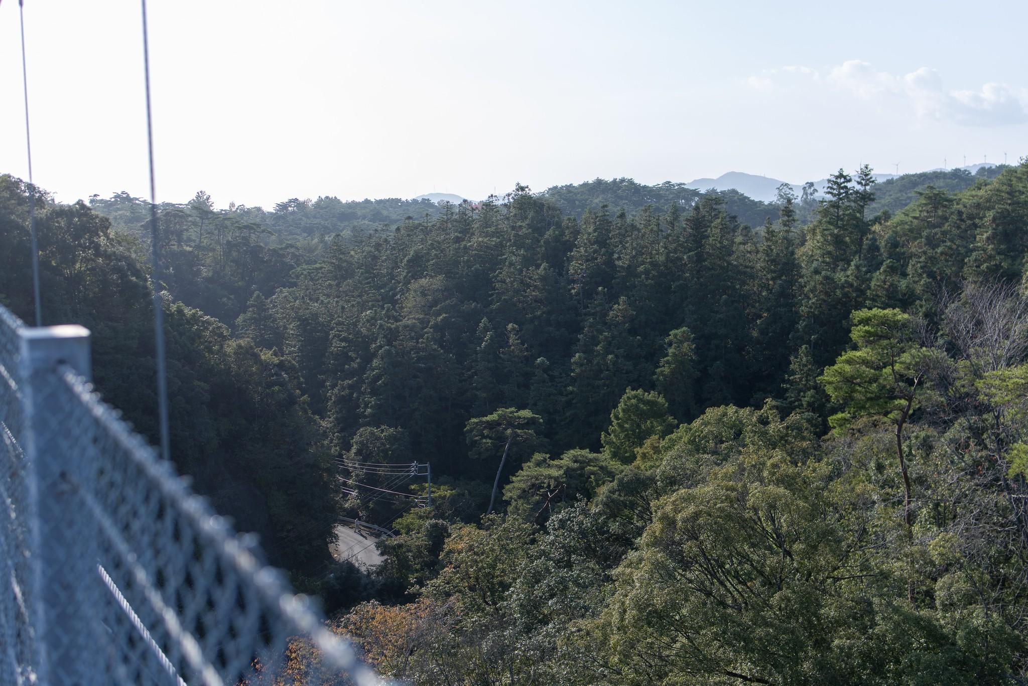 空の散歩道 @ 浜松 D810+Tamron sp 35mm F1.8