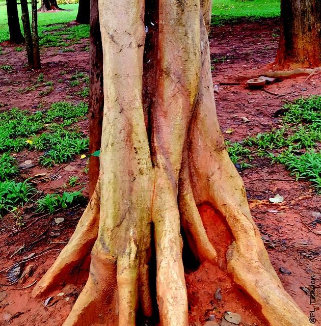 Tree Trunk (Explored}