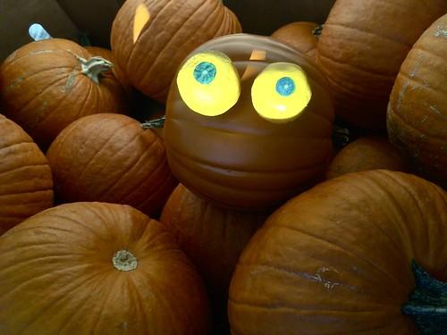 Rupert Pumpkin Eyes