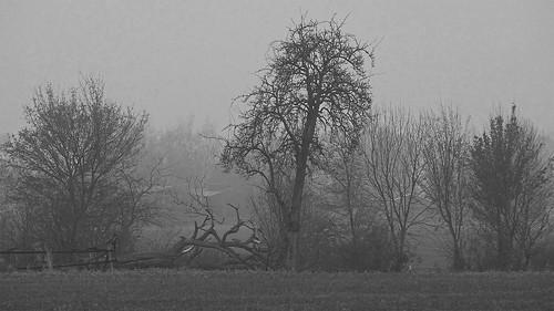 landscape landschaft trees line reihe seasons herbst autumn fall trist tristesse dismal fog mist unlimitedphotos