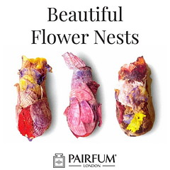 Bees Use Petals To Make Beautiful Flower Nests