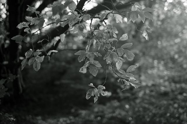 autumn light@walking path