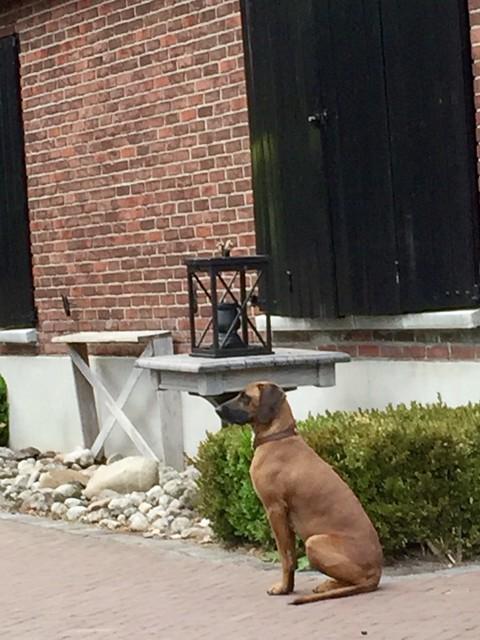 Zwarte luiken bruine hond groot windlicht