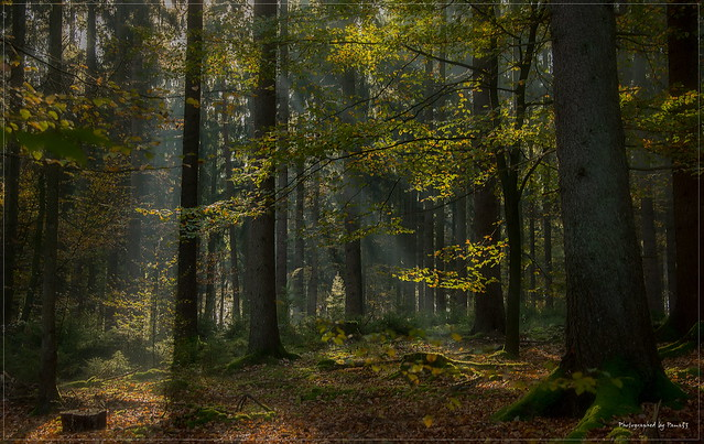 Herbstfarben - Klecker Wald - Morgendunst