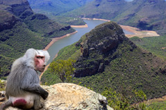 Baboon and Blyde river canyon