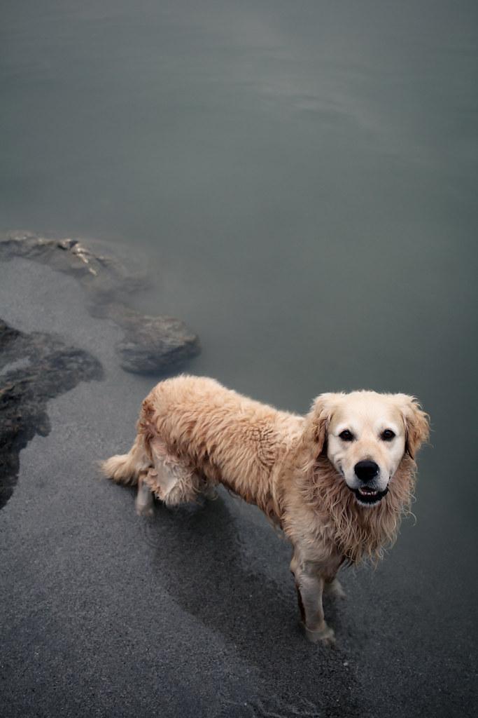 storia di un cane che si era perso.e di Matilde, esperta nel perdersi, ma ancora di più nel ritrovarsi.