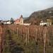 Vineyard in Vaduz