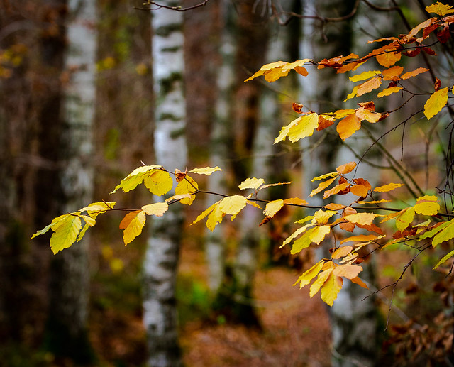 Autumn color in the forest