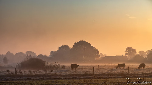 Morning mist, frost and sunrise