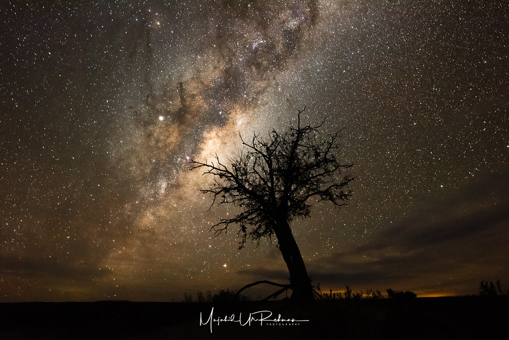 Milky Way over a Tree in Sutherland, South Africa