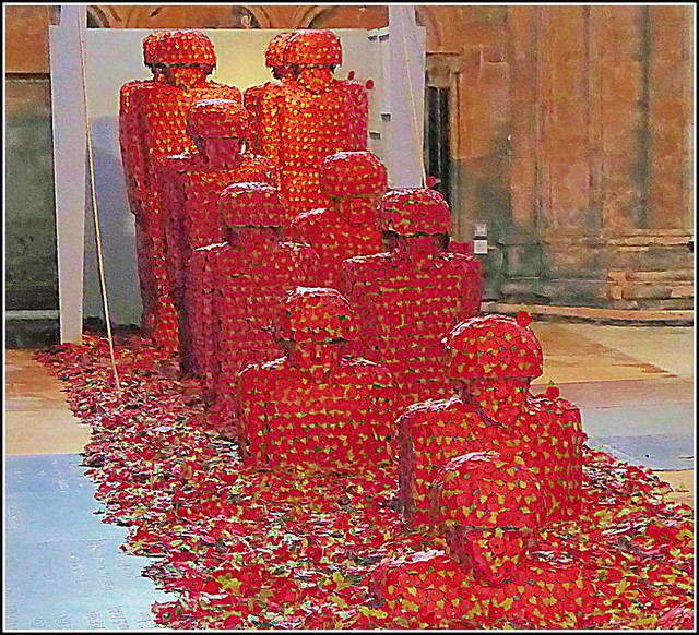 Rememberance  Poppies ...