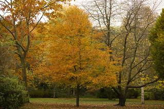 Autumn in Jesmond Dene   IMG_0413