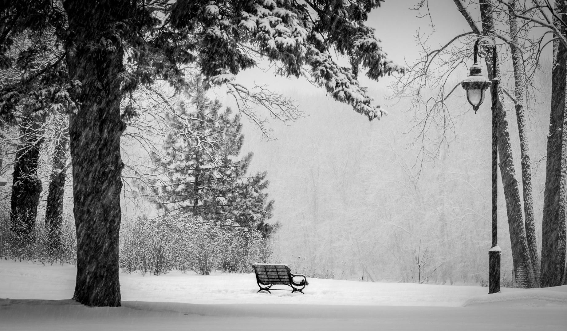 Solitude hivernale