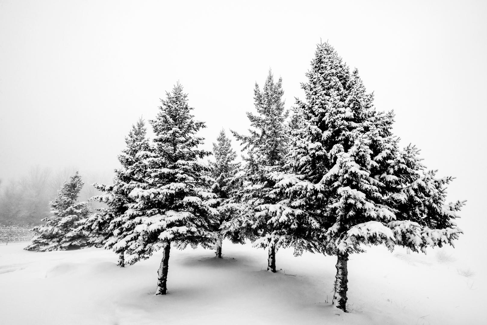 Matinée hivernale
