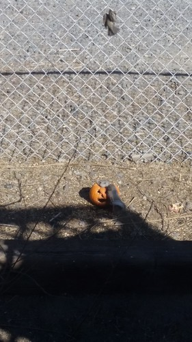 Pumpkin Spike Birdseed