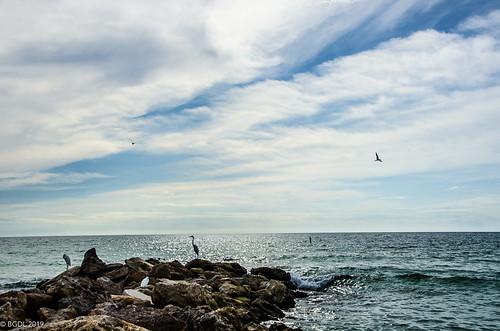 lightroomcc nikond7000 bgdl landscape nikkor18105mm3556g seascape florida lidobeach starmandscircle egret heron gulfofmexico week45 skyasbackdrop weeklytheme flickrlounge