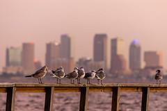 Tampa Birds