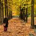 Sulle rive del Po, in autunno