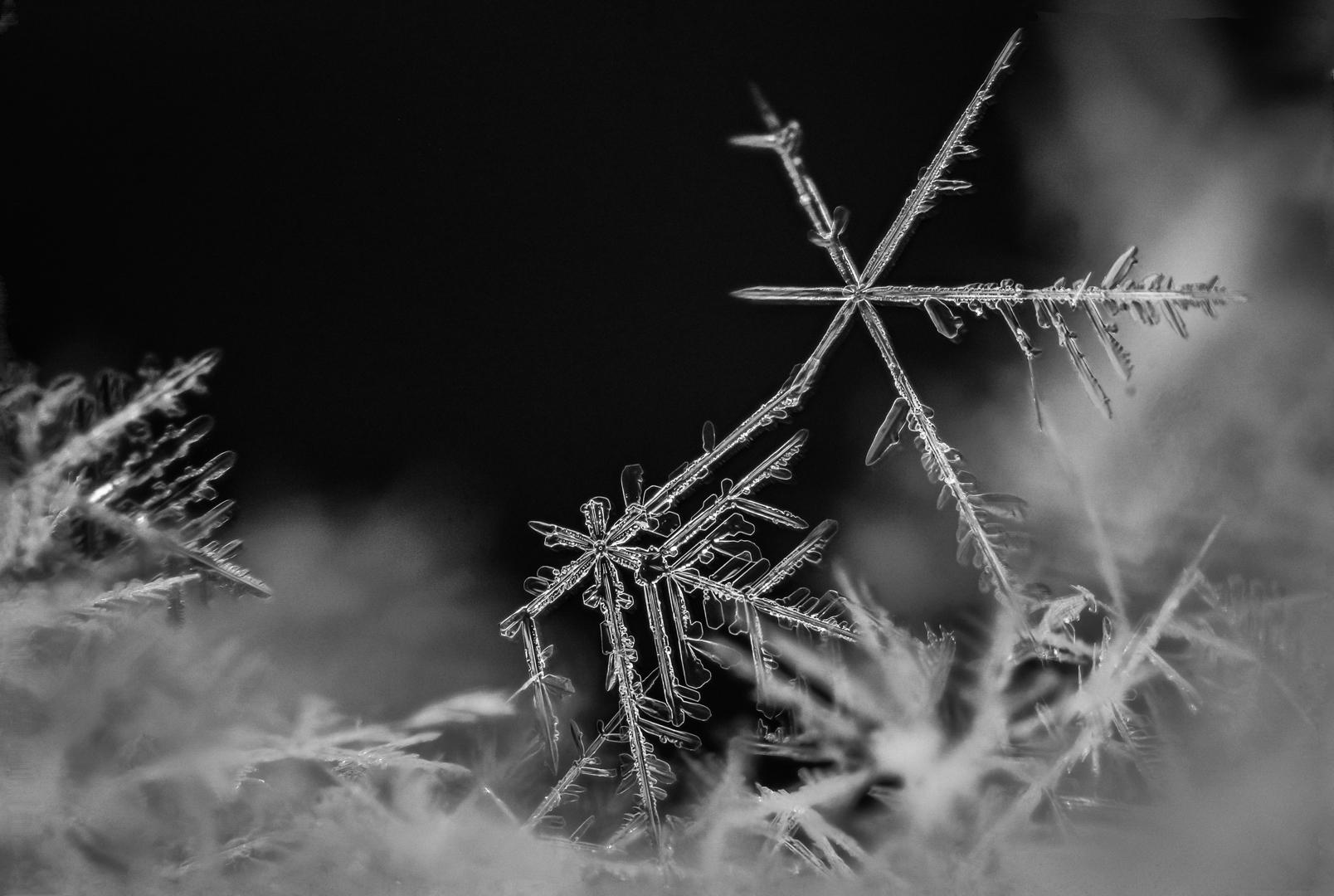 Aiguilles de glace