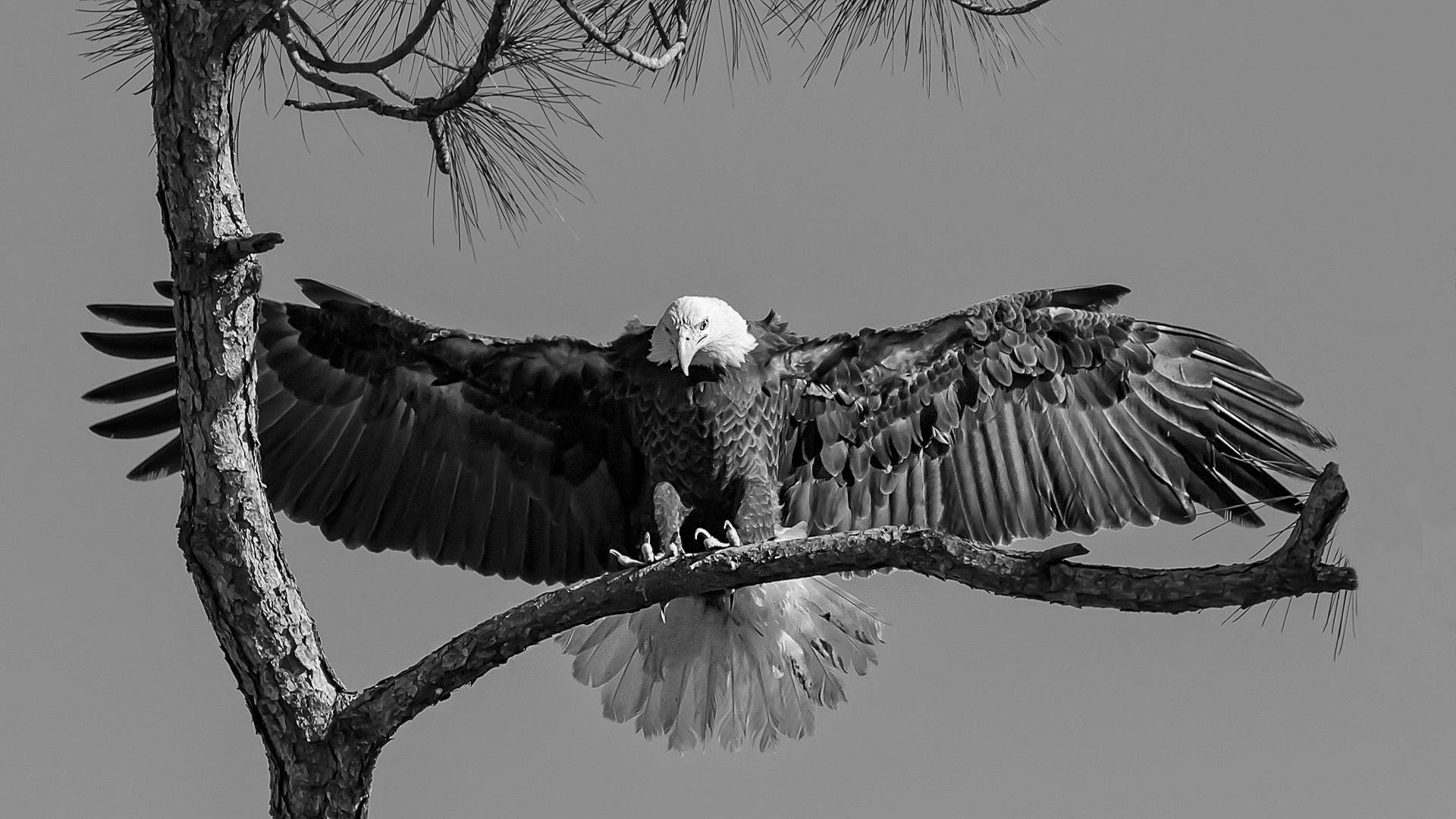 Arrivée au nid