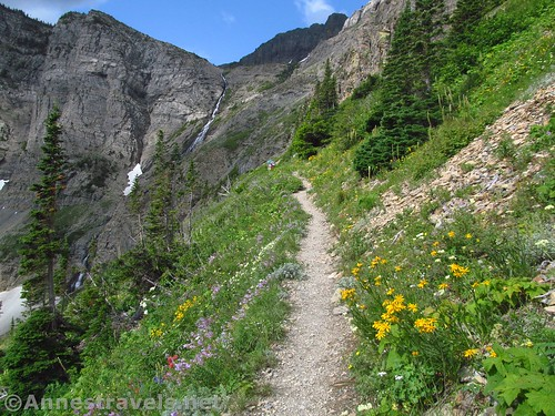 The Swiftcurrent Pass Trail rises through wildflower meadows toward Swiftcurrent Falls, Glacier National Park, Montana