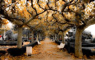 otoño en Leon