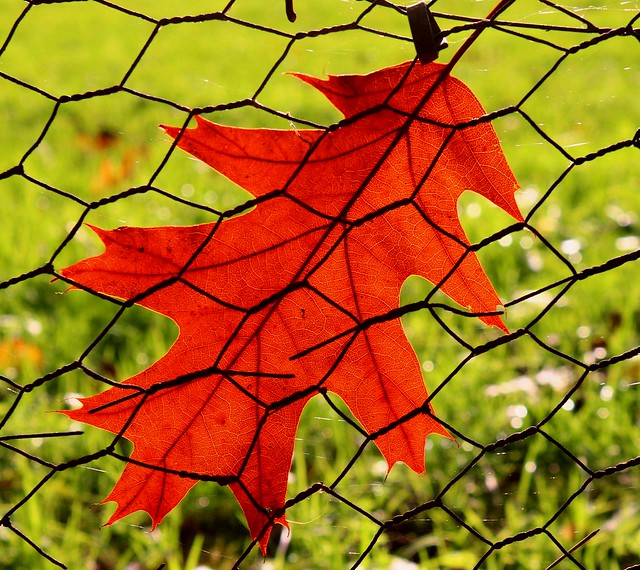 Autumn to the wire