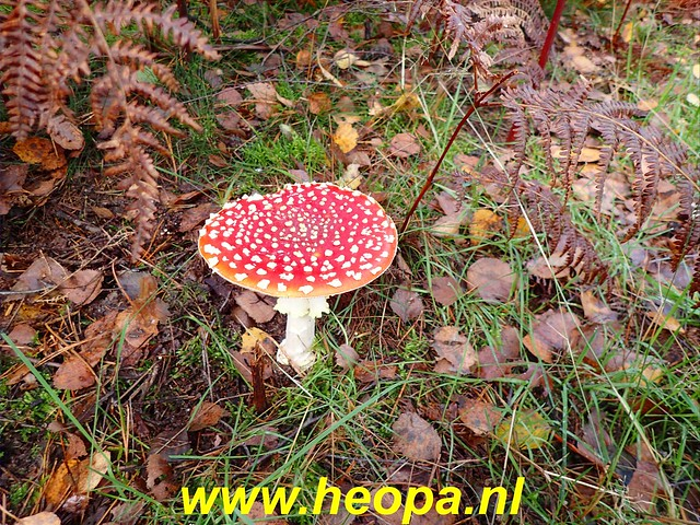 2019-11-06 Soest   (85)