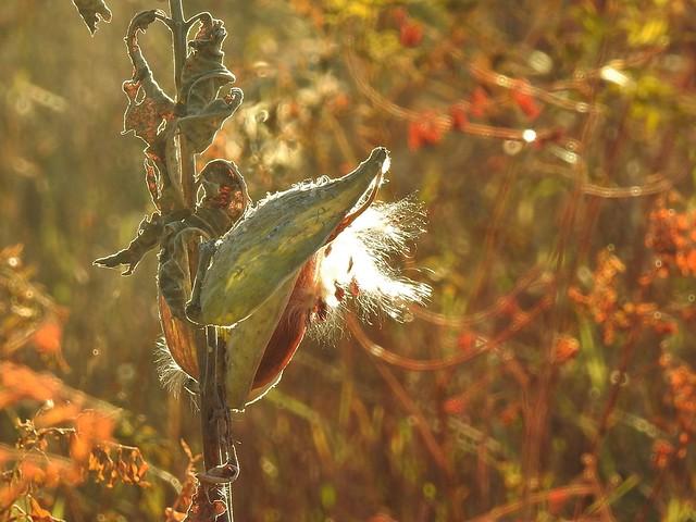 Fall colors ~ Explored