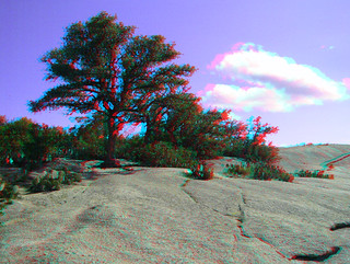 ENCHANTED ROCK TEXAS 3D RED CYAN ANAGYLPH OAKS ON THE SUMMIT  CLINGING TO LIFE