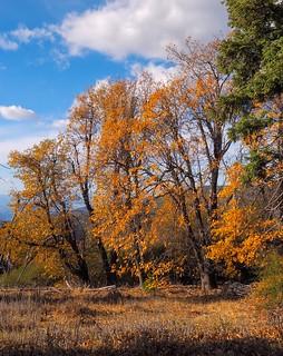 Golden Oaks, Palomar Mountain State Park