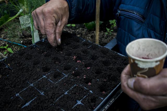Taller de propagación de plantas en Cerros Orientales