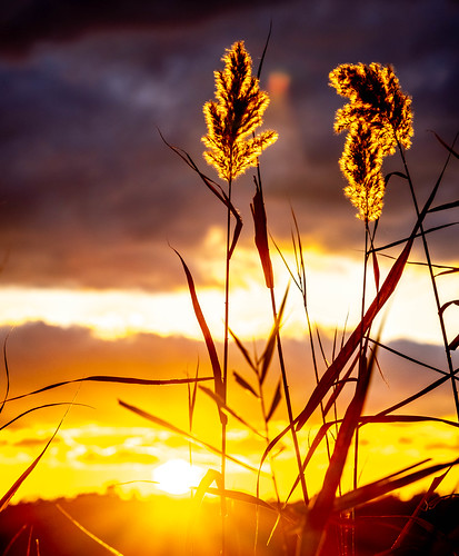 grass sunset sky nature helmetta newjersey unitedstatesofamerica