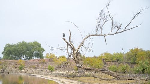 flowermound texas fall 2019 fog landscape nature heron murrellpark