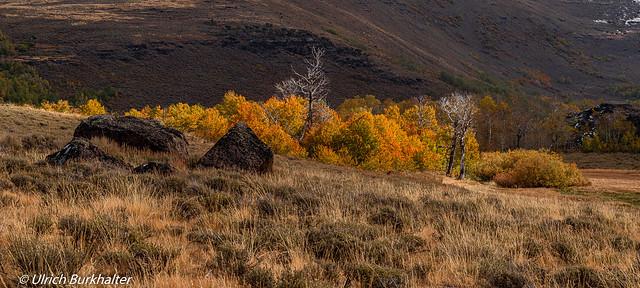 Eastern Oregon Fall colors