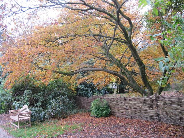 Emmett's An Autumn Walk