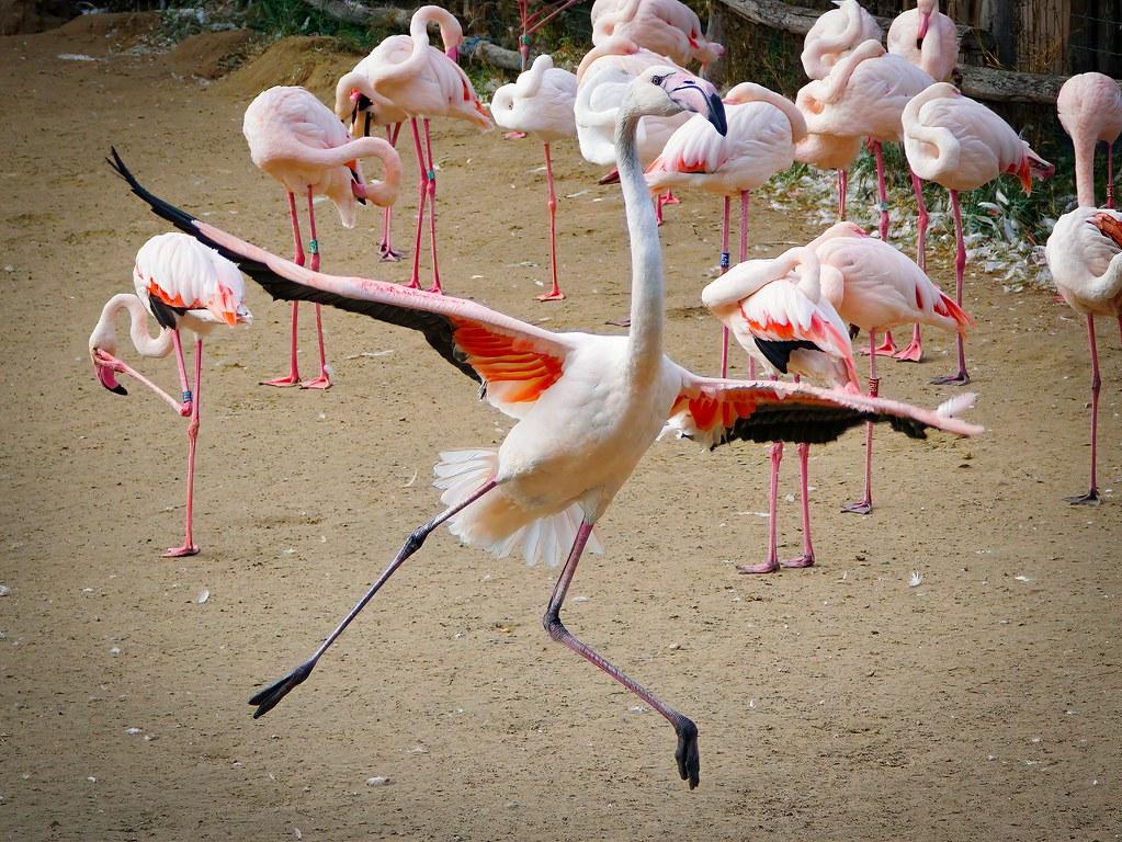 Crazy dancer (Sony Selp18105G)