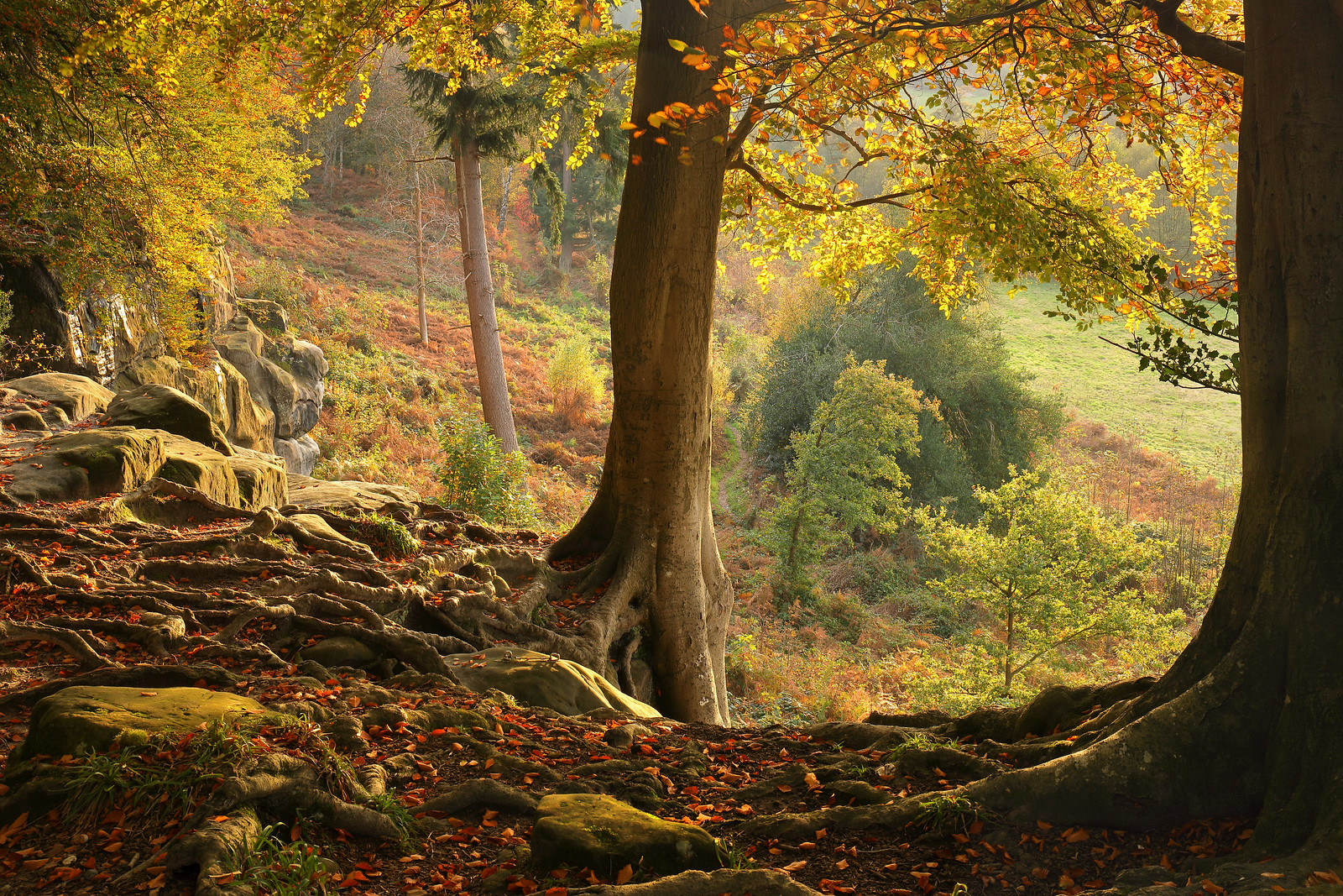 Autumn Woodland, East Sussex