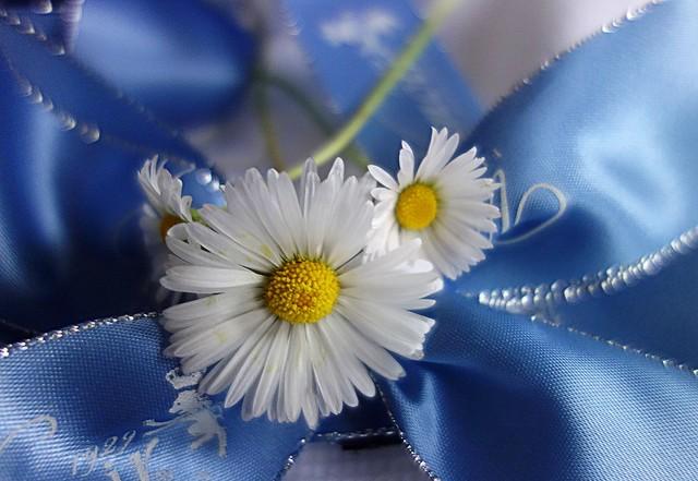 November daisies