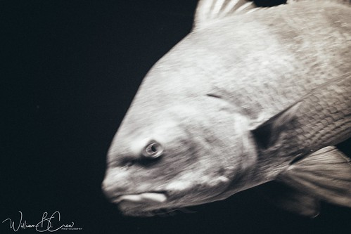 National Aquarium in Baltimore, MD