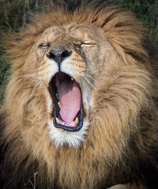 Yawn....