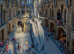 Museo de Historia Natural - Londres